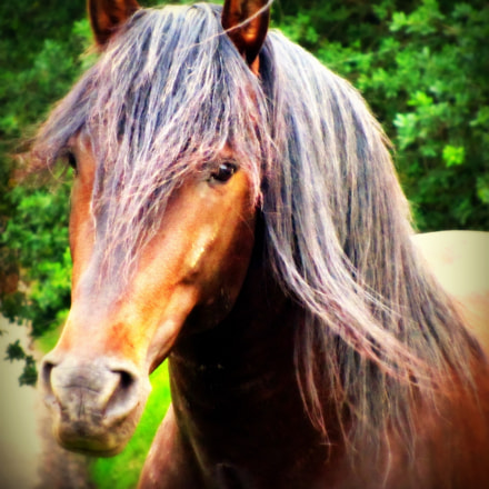 Dark Horse, Canon POWERSHOT SX210 IS