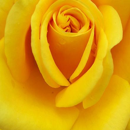Rose.., Samsung Galaxy A8