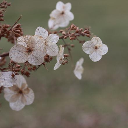 Floral 1, Canon EOS 80D
