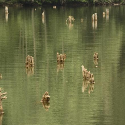 Old lake, Nikon D7100, Sigma 70-200mm F2.8 EX APO IF HSM
