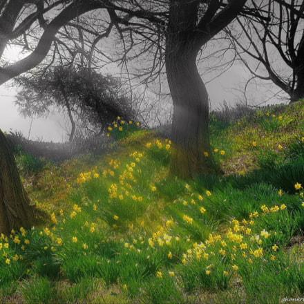 Spring fussy.., Sony DSC-H10
