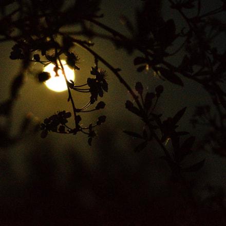 It's midnight. Full moon. Полночь. Полнолуние., Nikon D7000, AF Nikkor 85mm f/1.8D