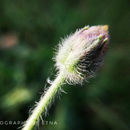 Flower bud, Samsung Galaxy J1 Ace