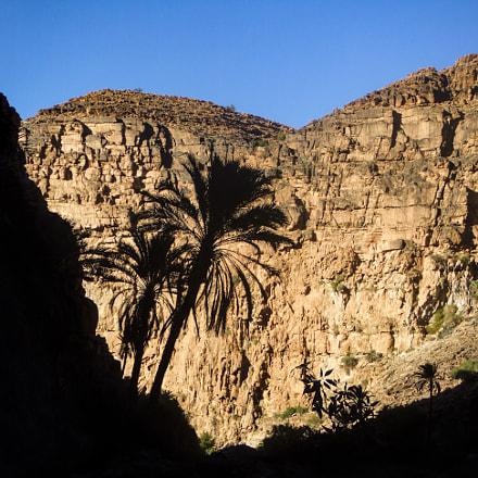 Palm Trees silhouette, Fujifilm FinePix Z1