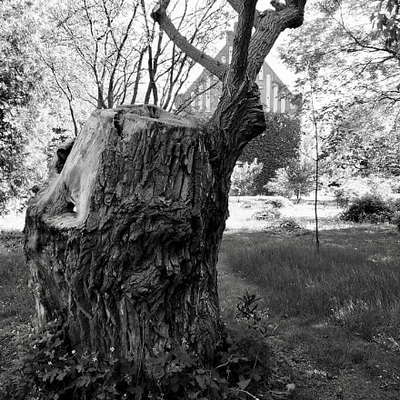 A tree in Lund,Sweden, Panasonic DMC-LX3