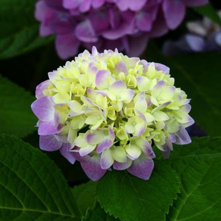 Flower, Nikon COOLPIX P900s