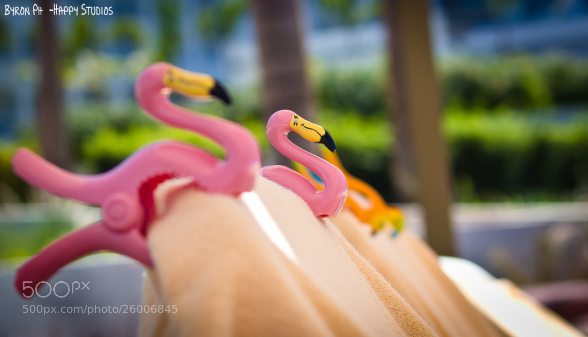Photograph Flamingo Towel Grippers by Byron Badilla on 500px