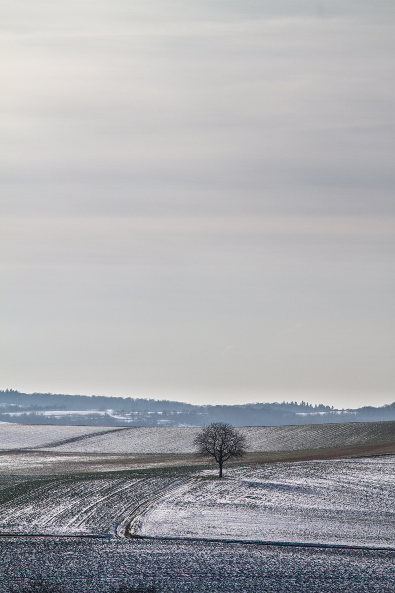 Photograph The Lonely Tree by Philipp K on 500px