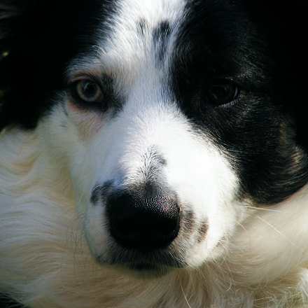 The Face Of Beau, Fujifilm FinePix S5700 S700