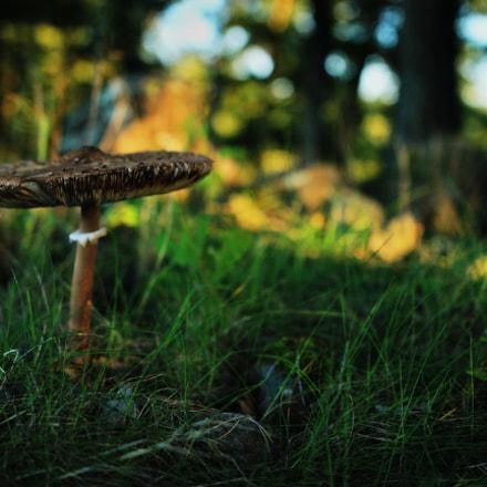 Magical mushroom, Canon EOS 600D, Sigma 18-35mm f/1.8 DC HSM