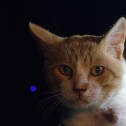 Gozo Cat, Panasonic DMC-TZ57