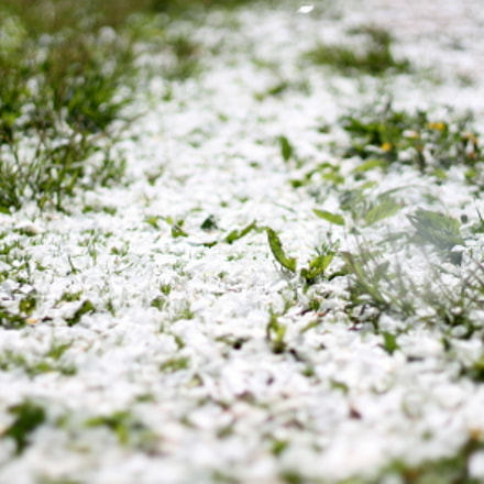 Petal imitation of snow.. ✔, Canon EOS 1100D, Canon EF 50mm f/1.8 II