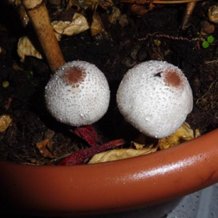 Mushrooms with eyes, Panasonic DMC-TZ57