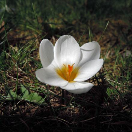 Little flower at the, Nikon COOLPIX P330