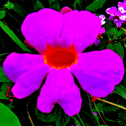 A Purple Flower In, Canon POWERSHOT SX60 HS, 3.8 - 247.0 mm