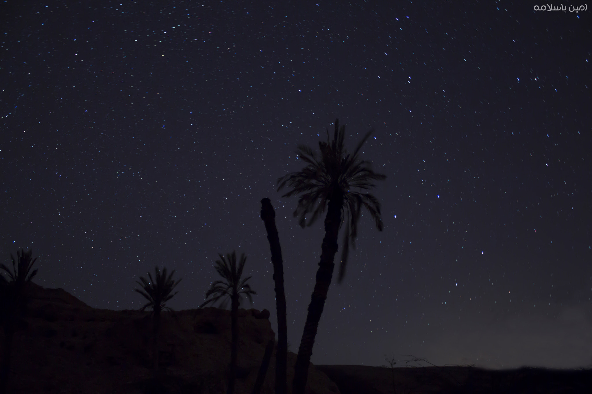 Photograph Nakhleh + stars / نخلة + نجوم by Ameen Basalamah on 500px