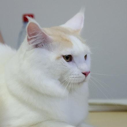 Cat, Canon EOS 40D