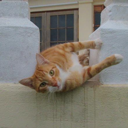 Curious cat, Canon IXUS 275 HS