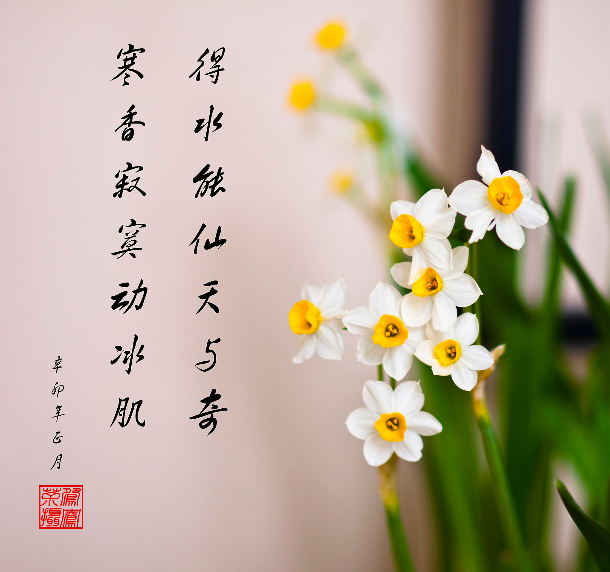 Photograph Poem and Narcissus by Joseph Qiu on 500px