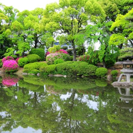 Garden, Nikon D300, Sigma 18-50mm F2.8 EX DC Macro