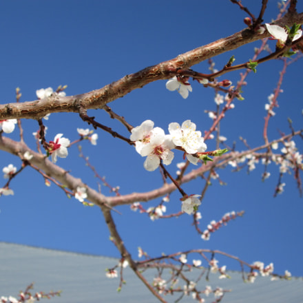 Spring, Canon POWERSHOT A2500