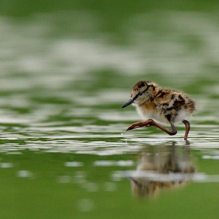 Walking on water, Nikon D500