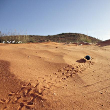 Desert Beetle, Sony DSC-W570