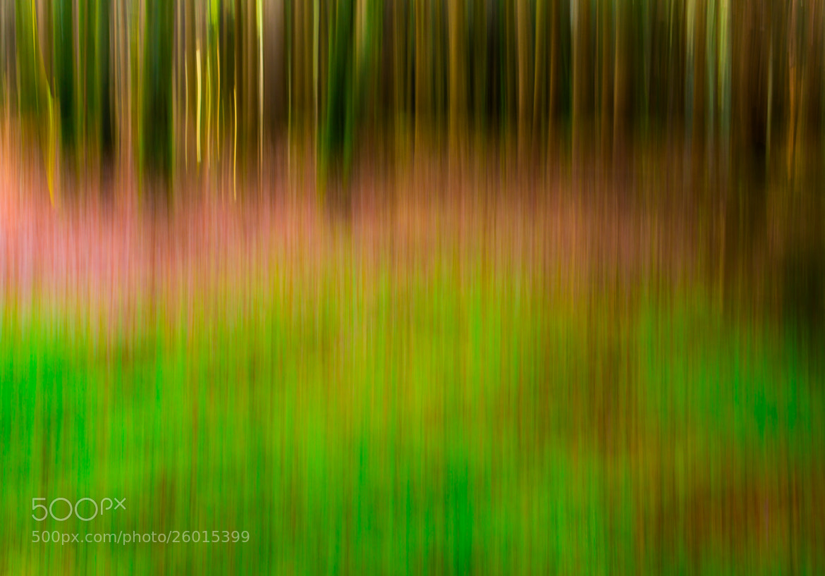 Photograph Green forest glade by Thomas Joekel on 500px