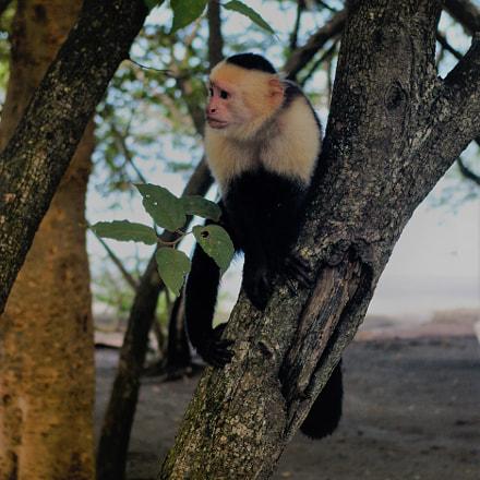 Monkey, Pentax K100D, smc PENTAX-DA 18-55mm F3.5-5.6 AL