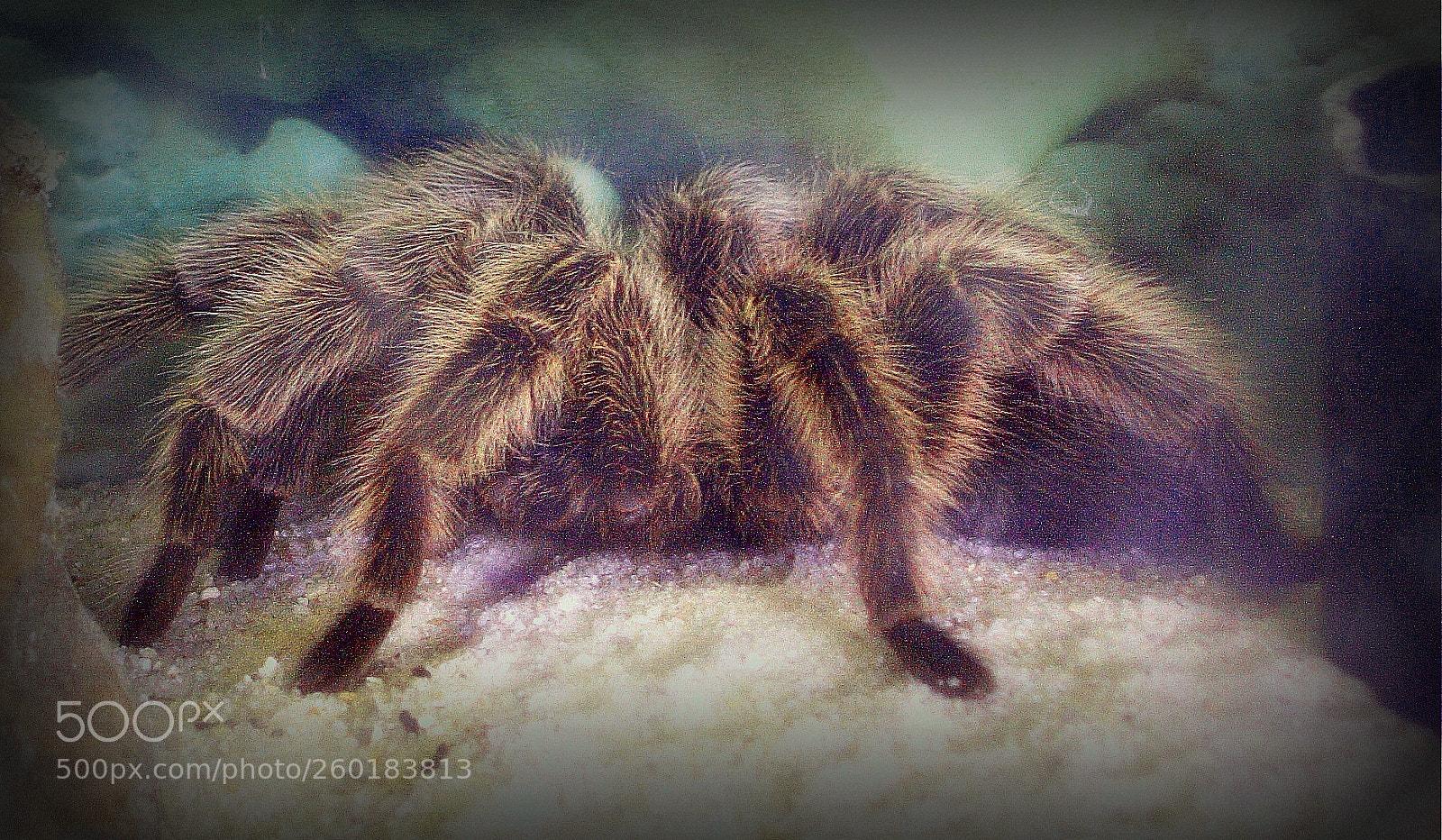 TARANTULA SPIDER!!, Nikon E5200