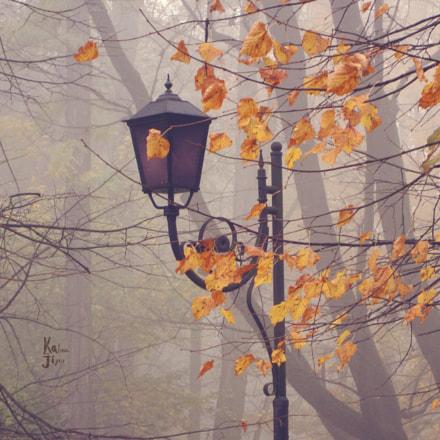 Осень Львов, Sony DSC-W230