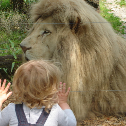 2 lions face to face, Sony DSC-L1