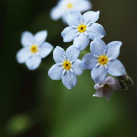 蓝色, Canon EOS 6D, Tamron 90mm f/2.8