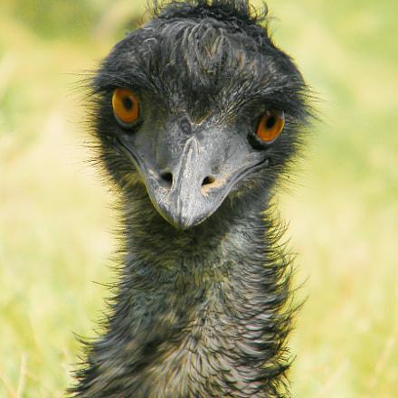 Emu, Fujifilm FinePix S2000HD