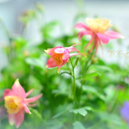 ..in my garden..., Nikon D5100, AF-S Nikkor 50mm f/1.4G