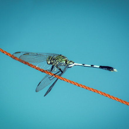 Dragonfly Blues..., Nikon COOLPIX P80