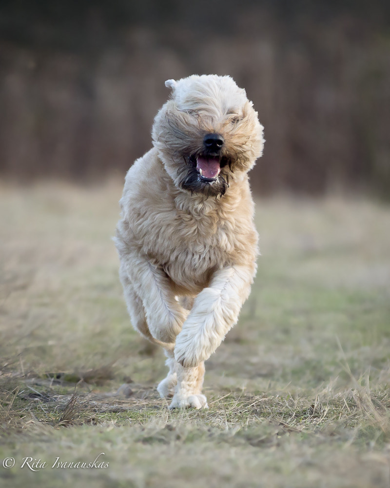 Photograph Smiling & Running by Rita's Pet Photography on 500px