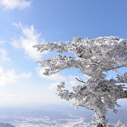 Snow with Tree, Nikon D610, AF-S Zoom-Nikkor 28-70mm f/2.8D IF-ED