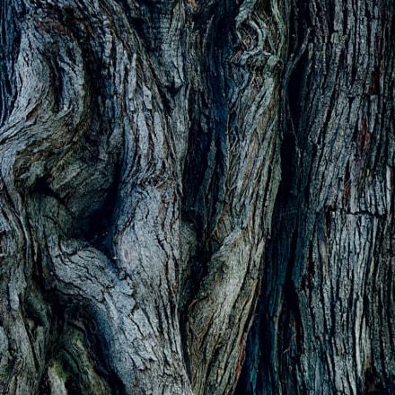 Old textured Tree, Panasonic DMC-TZ7
