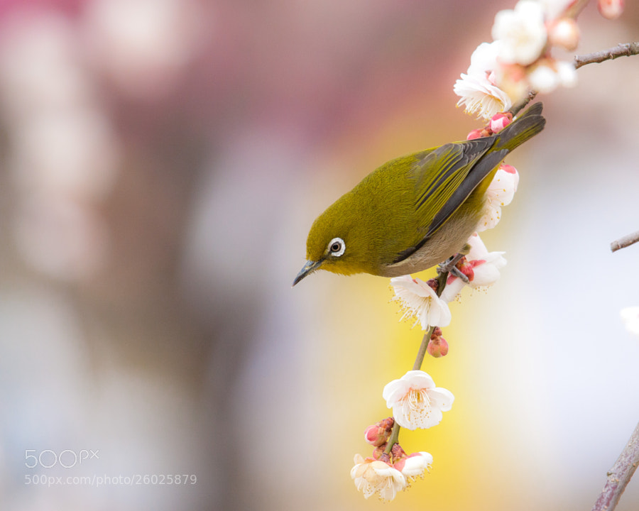 Spring has come #2 by Kaz Watanabe (paparl58)) on 500px.com