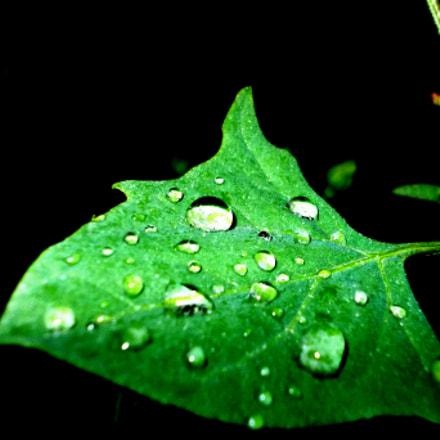 green leaf, Nikon COOLPIX L23