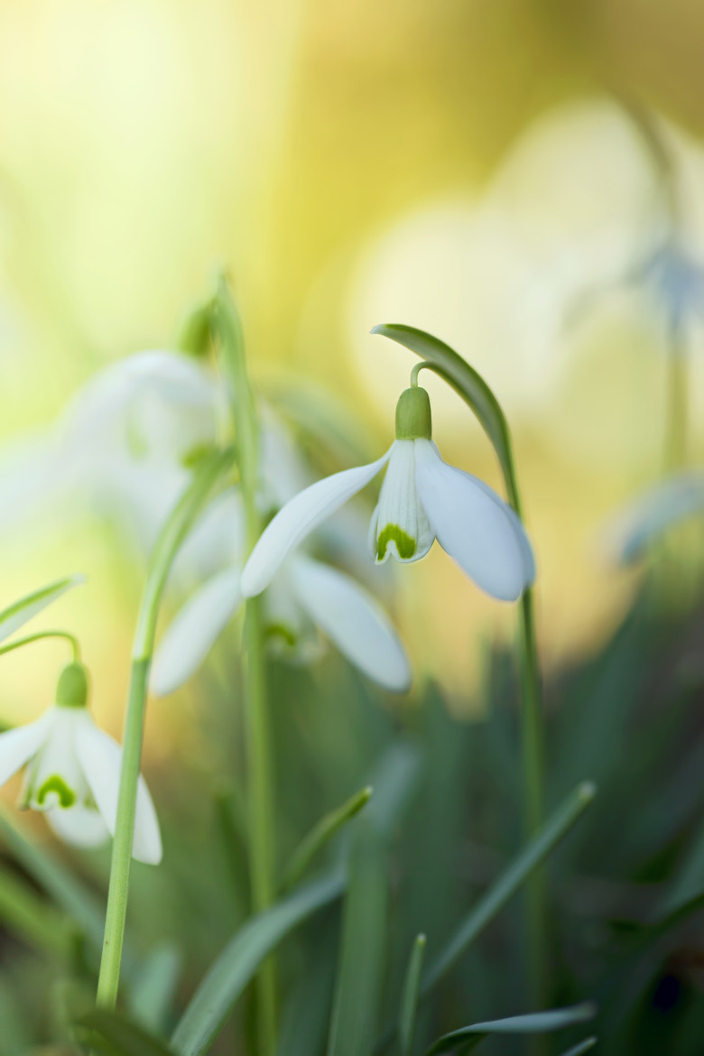 Photograph Flash of Spring by Renae Smith on 500px
