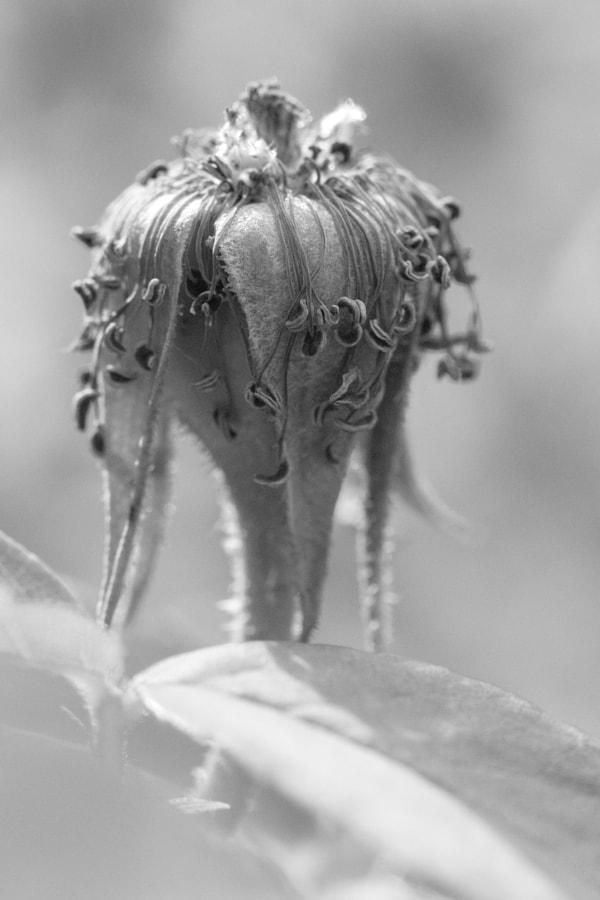 Mise en plis (Hair curling) de Christine Druesne sur 500px.com