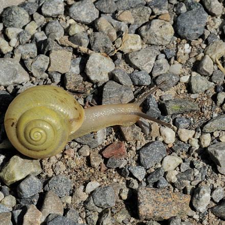 Snail on the rocks, Nikon D3, AF-S VR Micro-Nikkor 105mm f/2.8G IF-ED