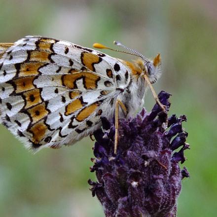Butterfly, Fujifilm FinePix HS30EXR