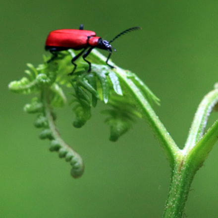 bug, Canon EOS 750D, Canon EF70-300mm f/4-5.6 IS II USM