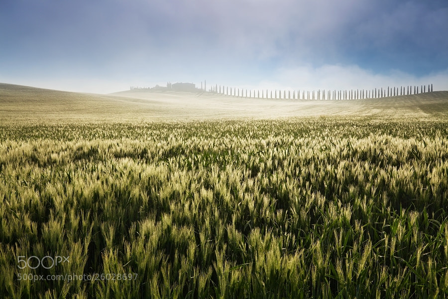 Photograph Tuscan misty morning by Daniel Řeřicha on 500px