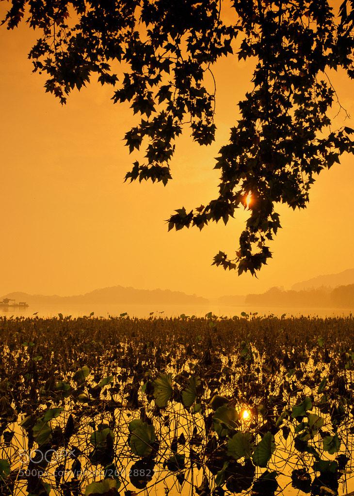 Photograph West Lake Twilight by Wilson Li on 500px