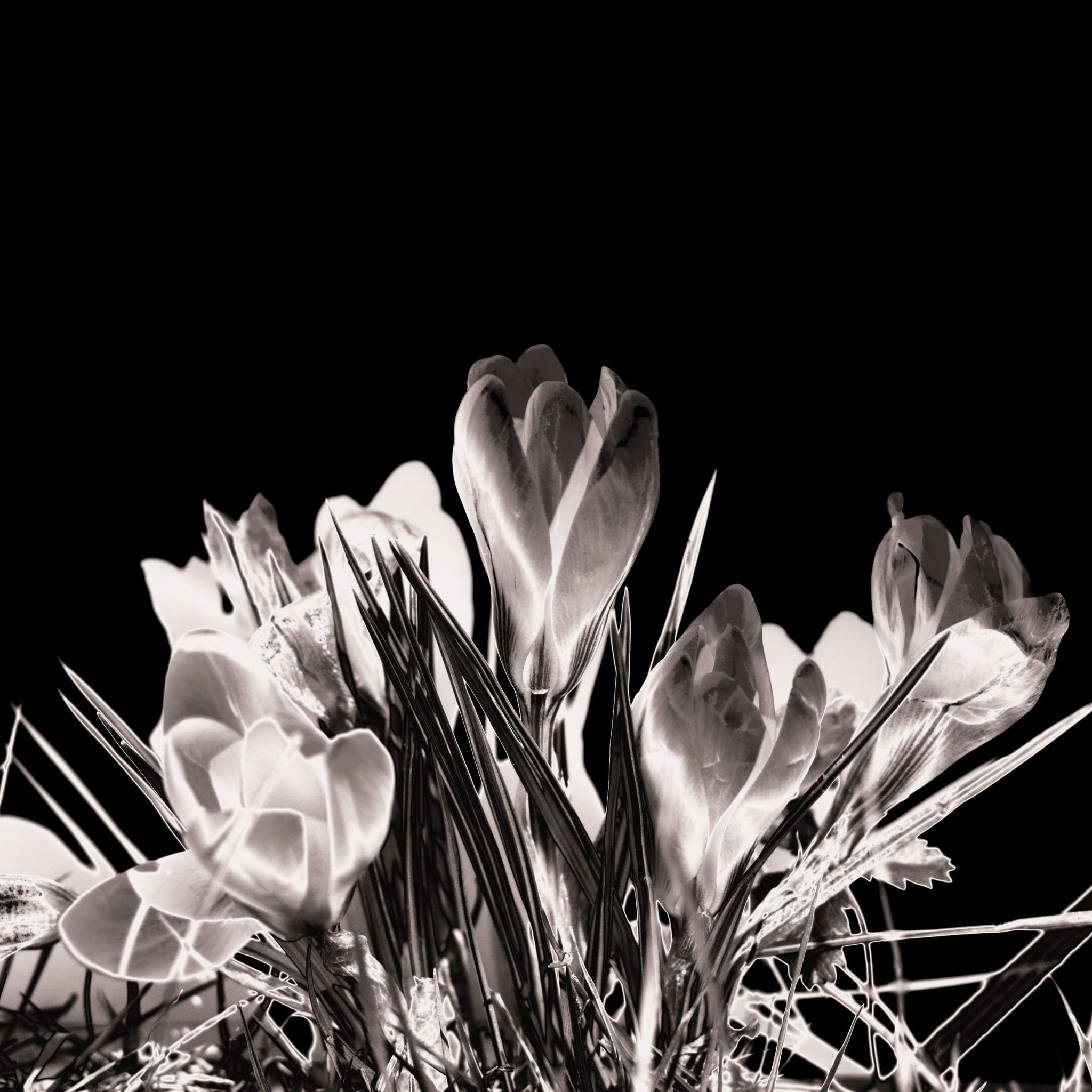 Photograph crocus by Olivier Bergeron on 500px