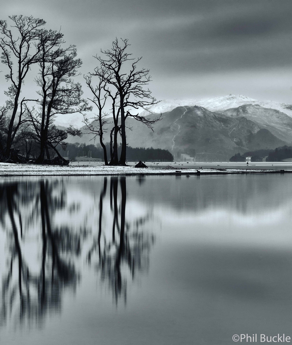 Photograph Winter Trees by Phil Buckle on 500px